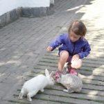 Kaninchen-Fütterung