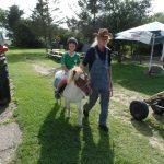 Pony-Malte